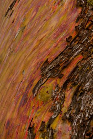 treebark.jpg